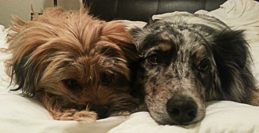 Image of two foster dogs